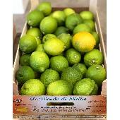 Citrons Siciliens de Ribera