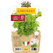 Cerfeuil – Plante en pot 14 cm – Orto mio