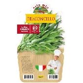 Estragon – Plante en pot 14 cm – Orto mio