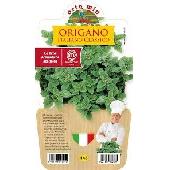 Origan – Plante en pot de 14 cm – Orto mio