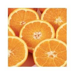 Oranges de Ribera Sicile � jus