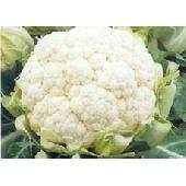 Chou-fleur Blanc