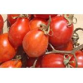 �Pomodorino del Vesuvio D.o.p.� Frais
