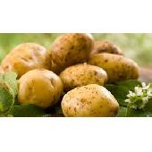 Pommes de terre d'Italie