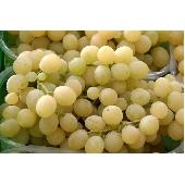 Raisin blanc Italia