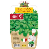 Basilic Italien (g�nois) � Plante en Pot 10 cm � Orto Mio