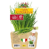 Ciboulette – Plante en pot de 14 cm – Orto mio