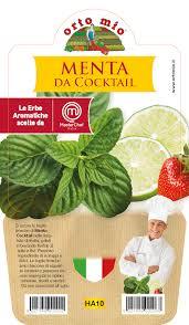 Menthe pour cocktails - Plante en pot de 14 cm � Orto mio