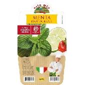 Menthe pour cocktails - Plante en pot de 14 cm – Orto mio