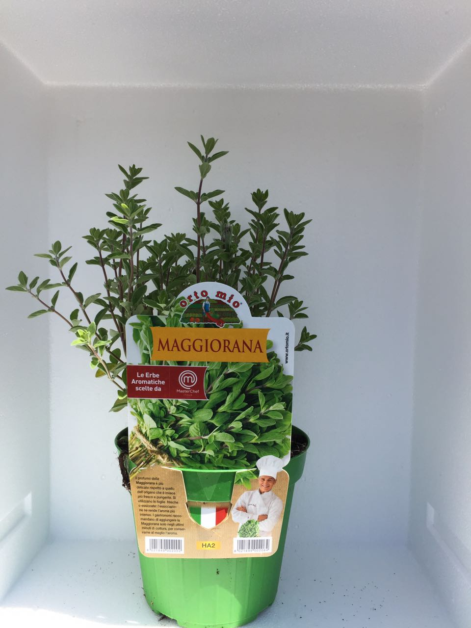 Marjolaine – Plante en pot de 14 cm – Orto mio