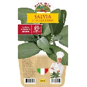 Sauge � larges feuilles – Plante en pot de 14 cm – Orto mio