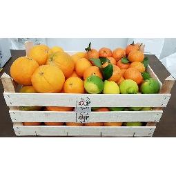 Cassata - d�gustation d'agrumes siciliens de Ribera  Ribera  - Azienda Ag. Guarraggi 6 kg. Oranges - jus 6 Kg. Oranges Fioroni Washington 3 kg. Cl�mentines 2 kg. Citrons naturels