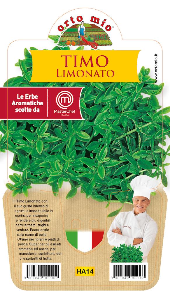 Thym Limonato  Plante en pot 14 cm. Orto mio